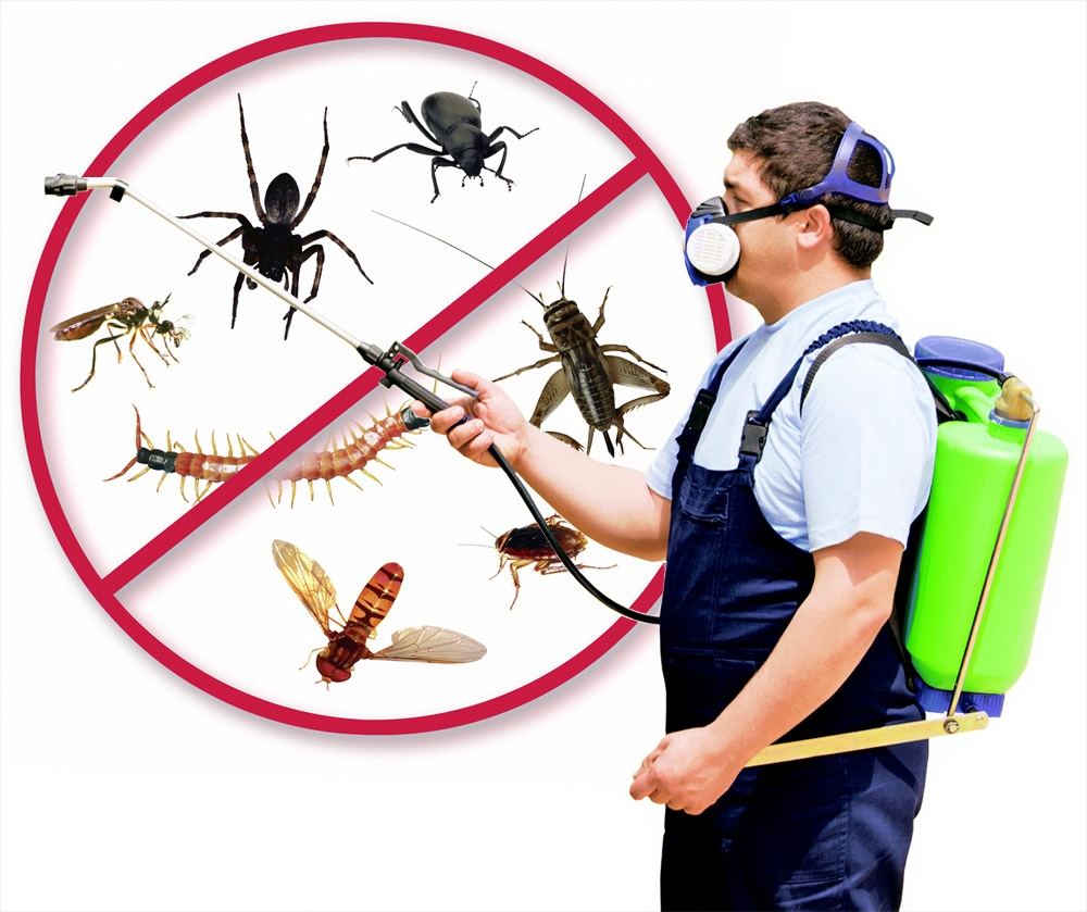 pest control measures