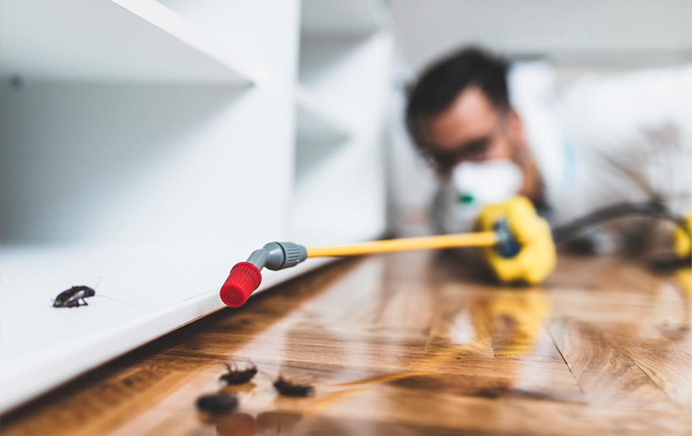 When to Hire a Pest Control Professional in Malaysia